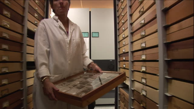 a scientist removes a drawer of samples at a bug lab. - studying stock videos & royalty-free footage