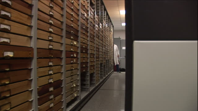 a scientist retrieves a specimen drawer from a storage room. - drawer stock videos & royalty-free footage