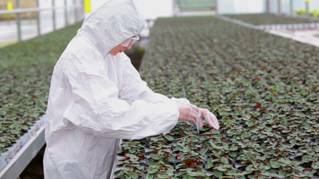 scientist standing at the greenhouse while working - scienziata video stock e b–roll