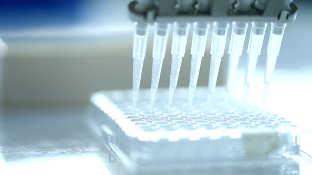 scientist transfer mix small volume liquids within 96 well dishes - pipette stock videos & royalty-free footage