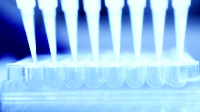 wissenschaftler transfermixbereichs kleine volume flüssigkeiten innerhalb von 96 gut speisen, zeitlupe - labor stock-videos und b-roll-filmmaterial