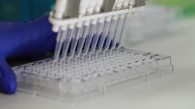 wissenschaftler transfer mischung kleine volumen flüssigkeiten innerhalb 96 gut speisen - pipette stock-videos und b-roll-filmmaterial