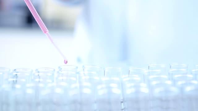wissenschaftler mit pipette füllen chemikalie in reagenzgläser machen experimente im labor - phiole stock-videos und b-roll-filmmaterial