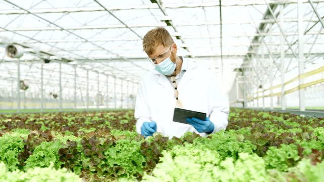 slo mo scientist working inside of a greenhouse - biologist stock videos & royalty-free footage