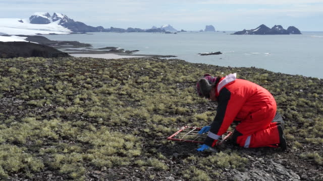 a scientist works near the ecuadorian antarctic station pedro vicente maldonado in antarctica on tuesday february 5 2019 it is summer in antarctica... - scientist stock videos & royalty-free footage