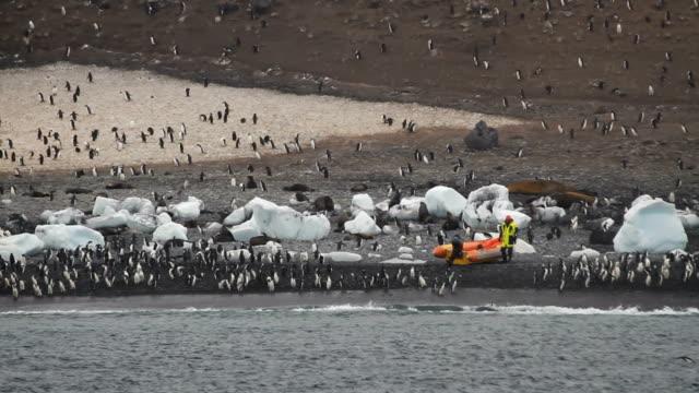 scientists arrive on seal island - antarctica scientist stock videos & royalty-free footage