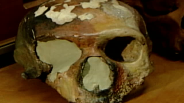 Scientists close to mapping genetic code for Neanderthal man GERMANY Leipzig Max Planck Institute INT Three fossilized skulls ZOOM IN fossilized...