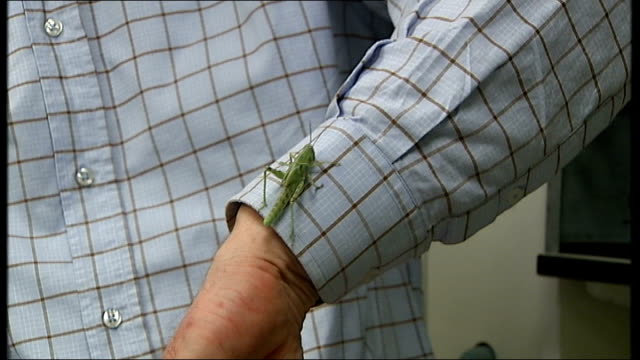 scientists discover what makes locusts swarm; england: int locust held on fingers locust crawling up shirt sleeve dr steve rogers interview sot - sleeve stock videos & royalty-free footage