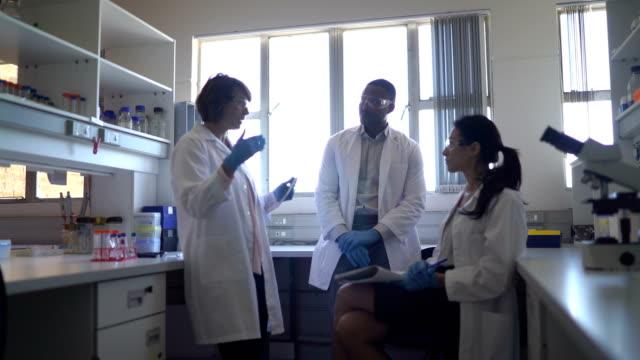 scientists discussing in laboratory - scienziato video stock e b–roll