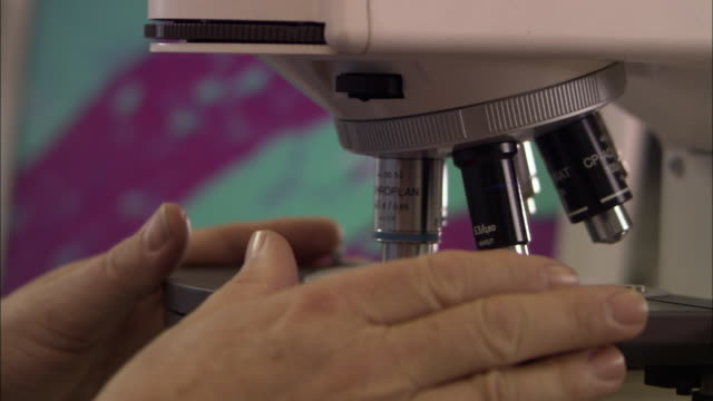 ECU, Scientist's hands adjusting laboratory microscope, London, England