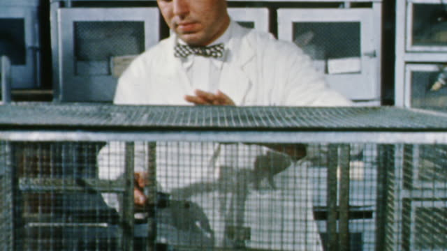 MS TD TU PAN Scientists inspecting  chinchillas and then lab rats in lab / United States