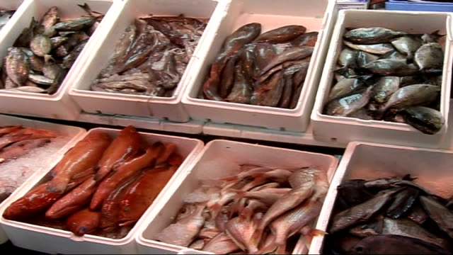 stockvideo's en b-roll-footage met scientists predict collapse of fish stocks by 2048 england london billingsgate fish market int market porters along with trays of fish trays of... - steurgarnaal