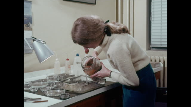 montage scientists study animal specimens to improve food production / uk - oscilloscope stock videos & royalty-free footage
