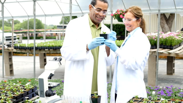 Scientists taking soil samples in professional greenhouse laboratory