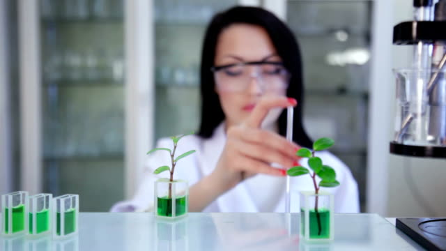 Scientist's test in the laboratory
