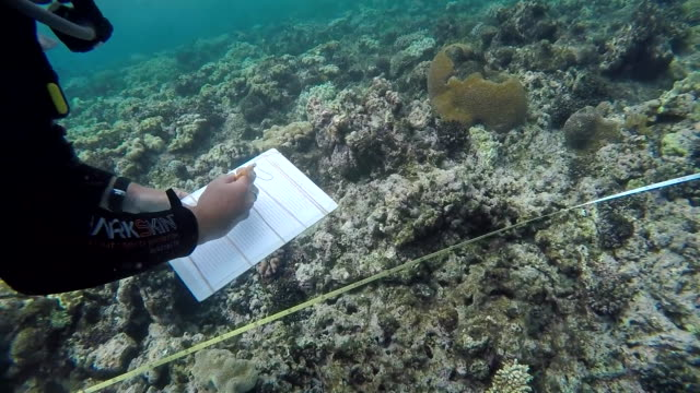 scientists underwater collecting data on bleaching on the great barrier reef - 漂白した点の映像素材/bロール