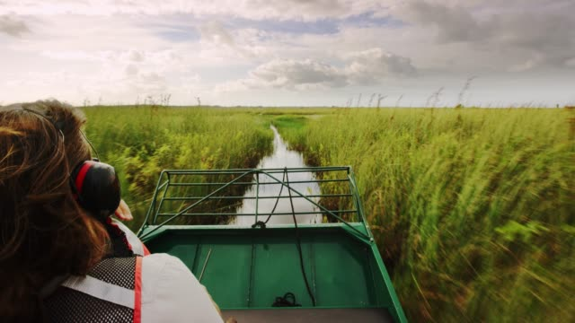 a scientists with the u.s. fish & wildlife service takes an airboat into the wetlands of arthur r. marshall loxahatchee national wildlife refuge, florida. - sumpf stock-videos und b-roll-filmmaterial