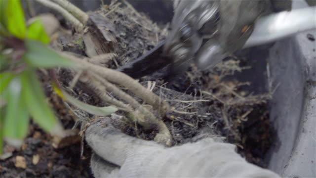 vidéos et rushes de 4k: ciseaux coupe les arbres. - gant de jardinage