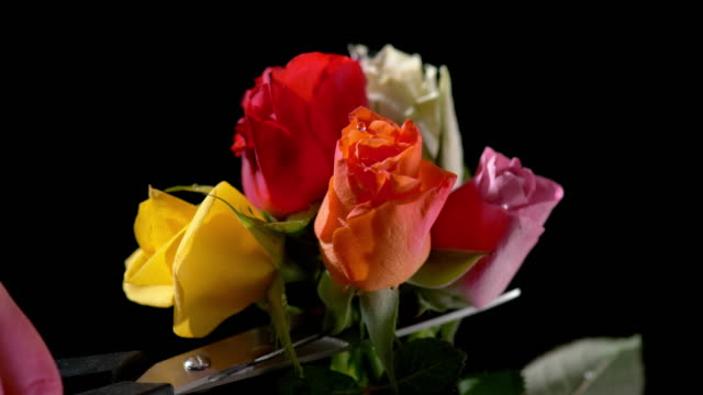 slo mo scissors cutting rose flowers in a bouquet off  their stems - five objects stock videos & royalty-free footage
