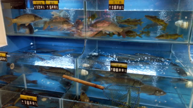 scoop net on aquarium at a supermarket - alternative energy stock videos & royalty-free footage