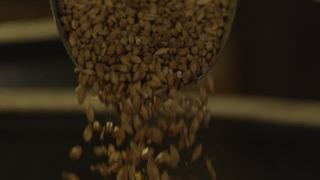 scoop of barley seeds falling into bin - seed stock videos & royalty-free footage