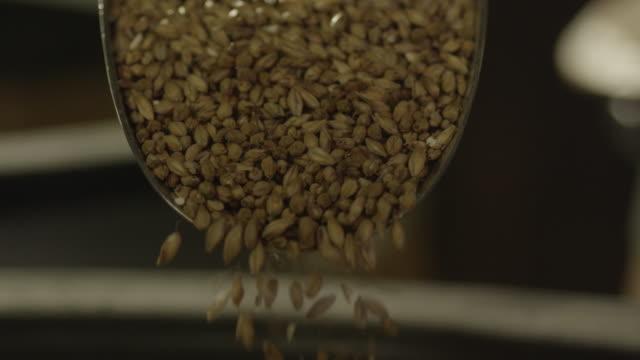 vidéos et rushes de scoop of barley seeds - graine