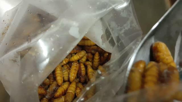 vidéos et rushes de scooping frozen coconut worms préparez-vous à cuire - insecte