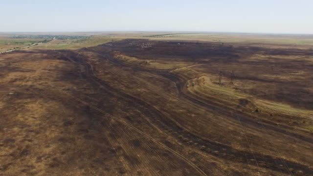 aerial: scorched earth in field after fire - dead plant stock videos & royalty-free footage