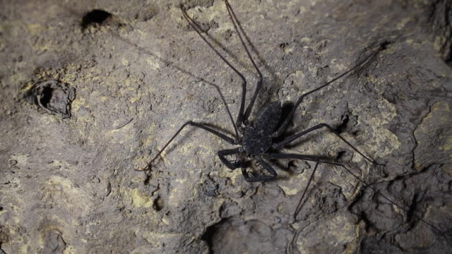 scorpion spider in a cave, extreme close - stalagmite stock videos and b-roll footage
