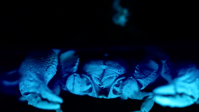 scorpion under ultraviolet light - scorpion stock videos & royalty-free footage