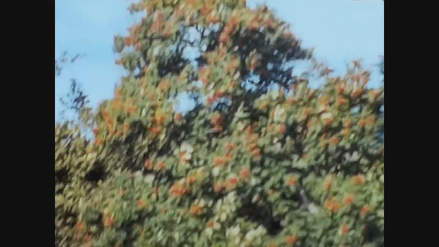 tree detail with leaves in a sunny day - macro stock videos & royalty-free footage