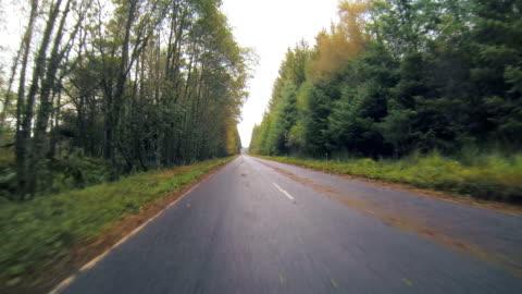 vidéos et rushes de scotland driving thick trees - route déserte