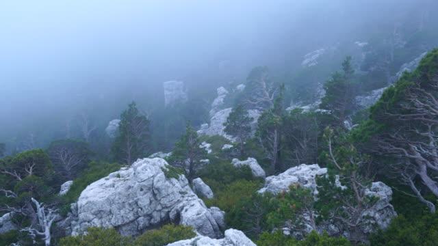 scots pine (pinus sylvestris), caro mountain range, the ports natural park, terres de l'ebre, tarragona, catalunya, spain - kiefer stock-videos und b-roll-filmmaterial