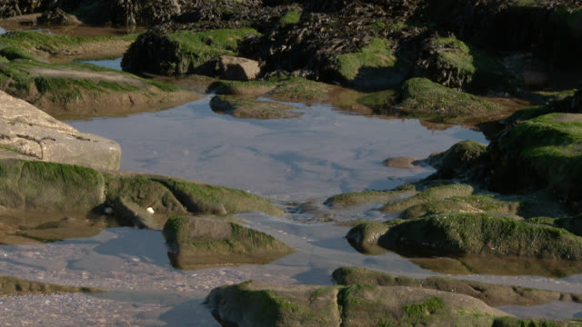 scottish beach on a bright sunny day - tide pool stock videos & royalty-free footage