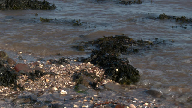 scottish beach on a bright sunny day - seaweed stock videos & royalty-free footage