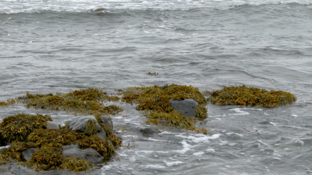 scottish coastline on a grey overcast autumn day - johnfscott stock videos & royalty-free footage