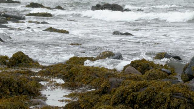 スコットランドの海岸線は灰色曇り秋の日 - johnfscott点の映像素材/bロール