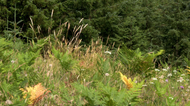 scottish countryside on a summer afternoon - wildflower stock videos and b-roll footage