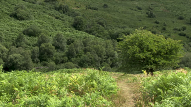 scottish countryside on a summer afternoon - fern stock videos & royalty-free footage