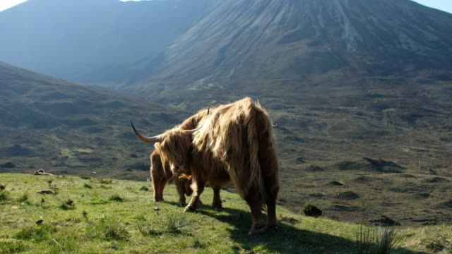 scottish highlands - scottish highlands stock videos & royalty-free footage