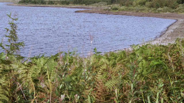 scottish loch in dumfries and galloway , south west scotland shot in late summer - fern stock videos & royalty-free footage