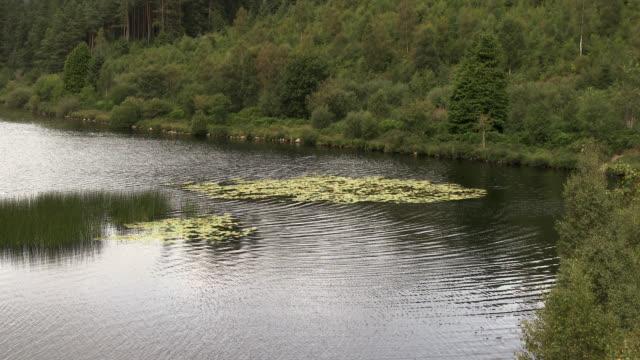 scottish loch in south west scotland - pianta acquatica video stock e b–roll