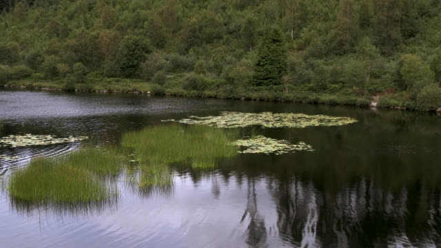 scottish loch in south west scotland - johnfscott video stock e b–roll