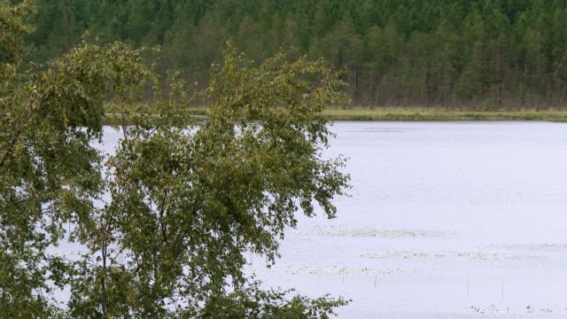 scottish loch in south west scotland - johnfscott stock videos & royalty-free footage