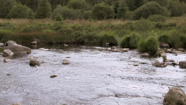 scottish river in a rural setting - galloway scotland stock videos & royalty-free footage