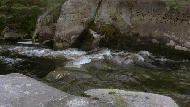 schottischen fluss in einer ländlichen umgebung - johnfscott stock-videos und b-roll-filmmaterial