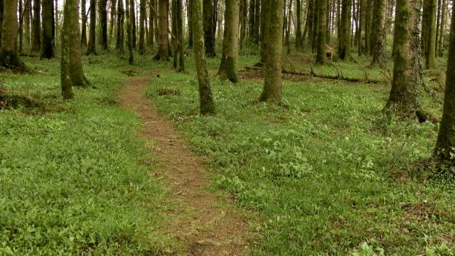 Scottish Scène rurale d'un sentier boisé