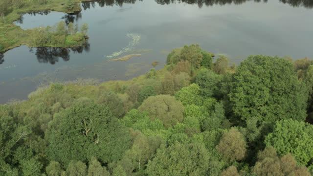vídeos y material grabado en eventos de stock de escena rural escocesa con bosque y lago - johnfscott