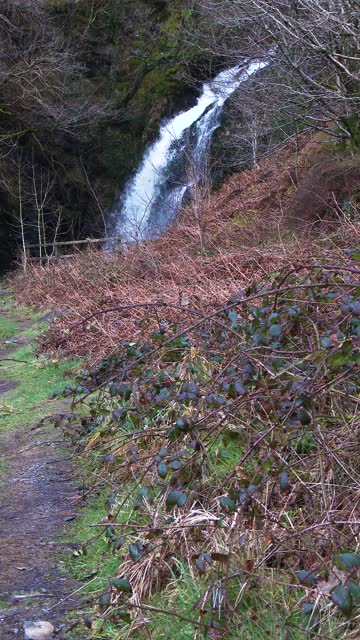 scottish waterfall on an overcast spring morning - johnfscott stock videos & royalty-free footage