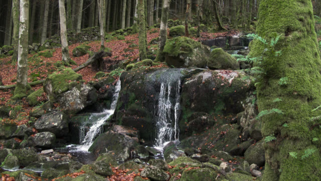scottish woodland and small waterfall in late autumn - galloway scotland stock videos & royalty-free footage